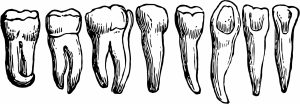 Tooth anatomy 2